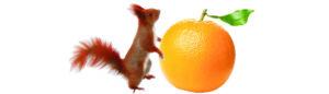 Eichhörnchen Orange